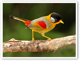 bird.0.jpg