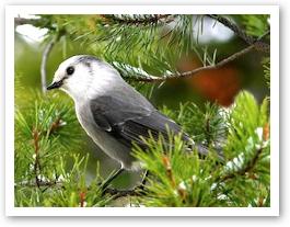 bird32.jpg