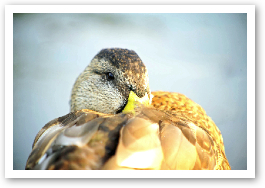bird74.jpg