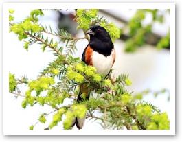 birdnorth.jpg
