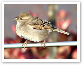 birdsmall2.jpg