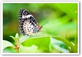 butterfly331.jpg