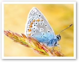butterfly57.jpg