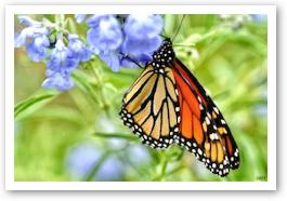 butterflytonhouse.jpg