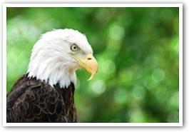 eagle51.jpg