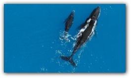earthwhales.jpg