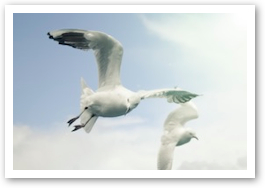 seagull3.jpg