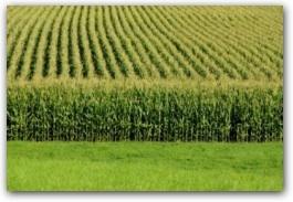 grainharvest.jpg