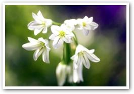 aaflowers4.jpg