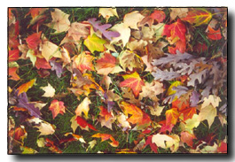 autumn_leaves_one.JPG